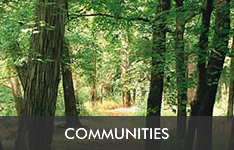 WIELER - Communities