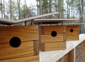 photo of all three Modern Birdhouses