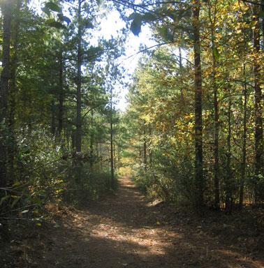 Henley trail